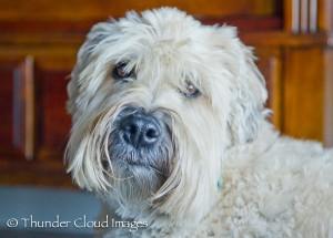 ThunderCloudImages_wildlifephotography_Montana_StormyBarton_Bailey