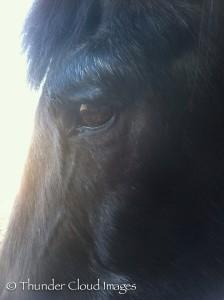 ThunderCloudImages_wildlifephotography_Montana_StormyBarton_Horse7