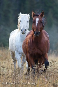 ThunderCloudImages_wildlifephotography_Montana_StormyBarton_Horses4